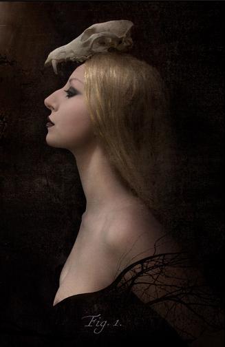 Figure 1: Noir